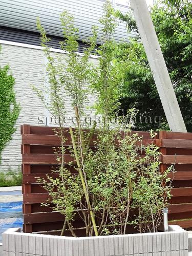 施工例画像:埼玉県三郷市 新築庭工事 ナチュラル シンボルツリー 植栽