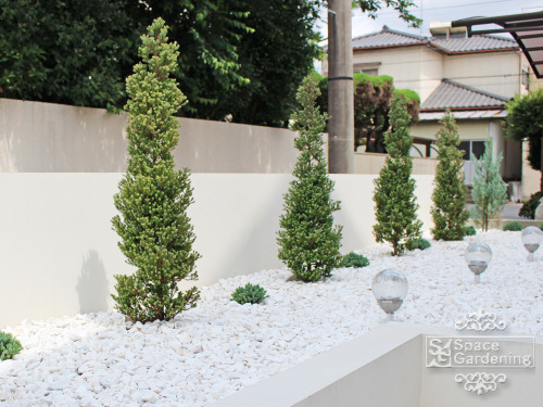 植栽 庭木 常緑樹 コニファー
