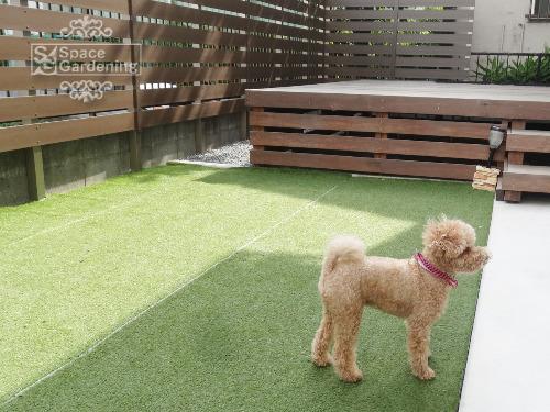 人工芝 愛犬
