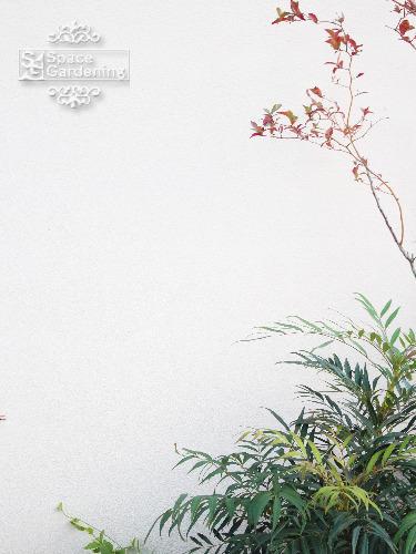 植栽 マホニアコンフューサ