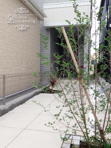 植栽 シンボルツリー 落葉樹 エゴノキ アプローチ