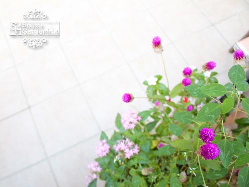 草花 植栽