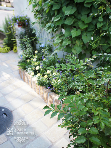 花壇 ピンコロ