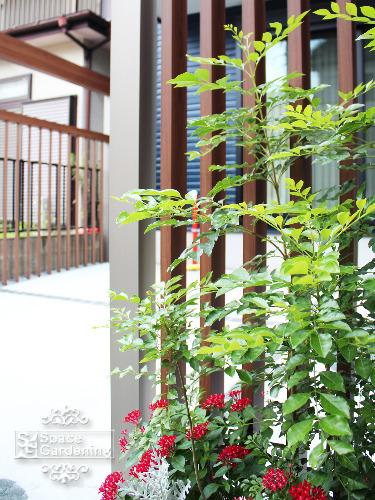 植栽 常緑樹 シマトネリコ