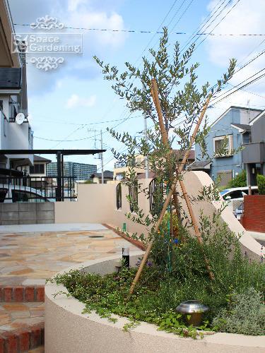 植栽 常緑樹 オリーブ