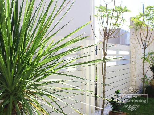植栽 常緑樹 ドラセナ