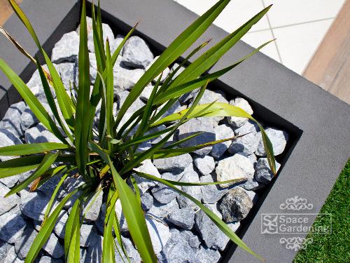 花壇 植栽 ニューサイラン
