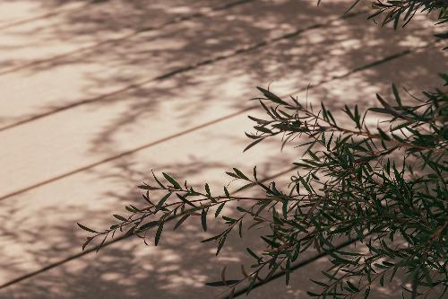 LIXIL 樹ら楽 樹脂ウッドデッキ 植栽