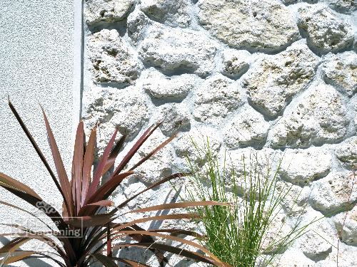 琉球石灰岩 飾り壁 目隠し塀 植栽 コルジリネ