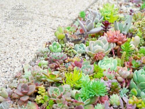 植栽 花壇
